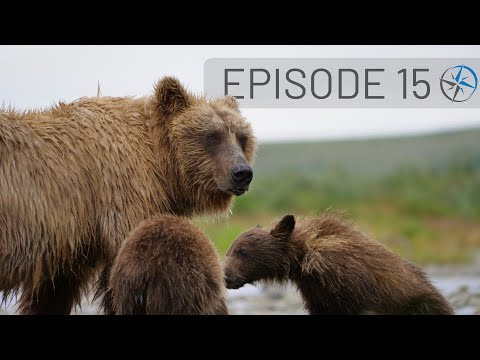 Up Close with Katmai National Park Bears - Adventures in Homer & Seward, Alaska | Go North Ep 15