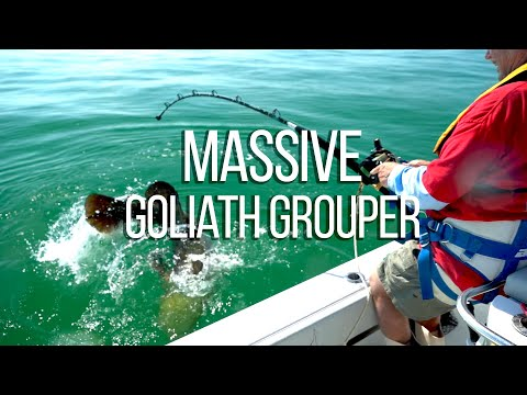 MASSIVE 300lb Goliath Grouper caught by 70 year old man!