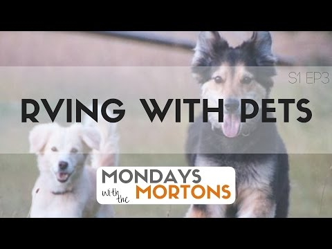 RVing with Pets - Mondays with the Mortons